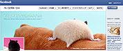 バジリコ株式会社:ハムケツFacebookページ